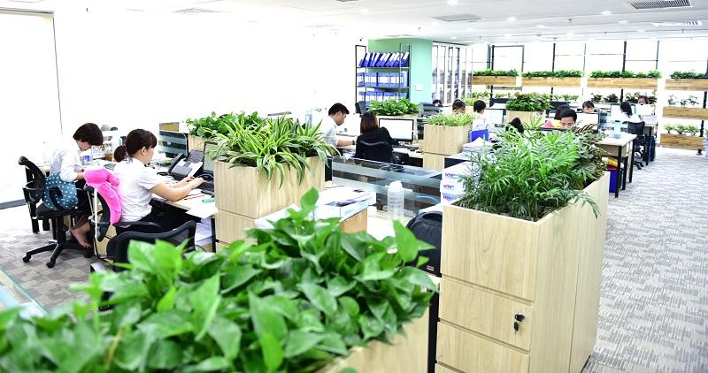 Mô hình văn phòng xanh đáng mơ ước